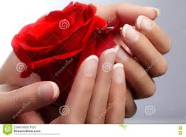 female hand with red french manicure nails royalty free stock