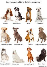 imagier les races de chiens lulu la taupe jeux gratuits pour