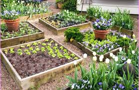 Raised Vegetable Garden Layout Raised Vegetable Garden Bed Layout Hydraz Club