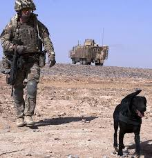 an afghan hounded by his past 98 best best of british images on pinterest british army
