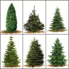 real christmas tree christmas decor ideas