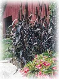all america winners for 2003 indiana yard and garden purdue