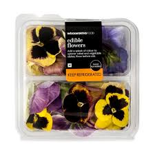 edible flowers for sale 18 list of winter flowers buy brachychiton acerifolius