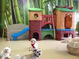 Cat Treehouse A Dog U0027s Dream Daycare Llc A Cat U0027s Dream Treehouse Dog Cat