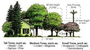 where to plant trees in your yard metamorphosis landscape design