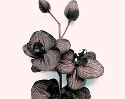 black orchid flower one black orchid 3 5 inch size artificial flowers