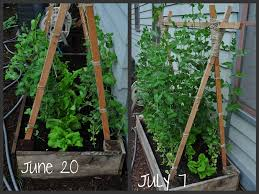 june july garden update
