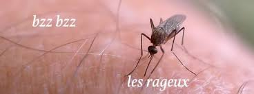 moustique dans ma chambre les moustiques ces enflures qui pourrissent tous mes étés