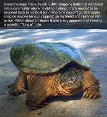 Turtle Meme - the story of frank a snapping turtle with a serious attitude problem