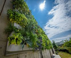 phipps conservatory displays vertical gardening with livewall