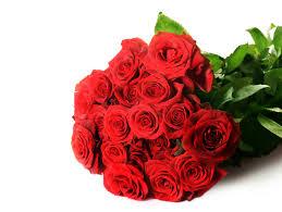 wallpaper flower red rose wallpaper red roses bouquet hd 5k flowers 3580