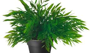 plant artificial plants stunning fake plants ikea the best