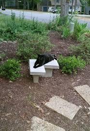 How To Build A Garden Bench Build A Concrete Garden Bench For Less Than 30 Hometalk