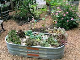 horse trough succulent garden crafty garden treasures