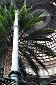 palm trees in the winter garden pavilion at ny carlsberg