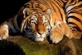 beautiful animals hd wallpapers etc fn e74bf1 dedf9972574149719ad6d63b33dd6940