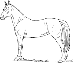 horse blank black white line art coloring sheet colouring page