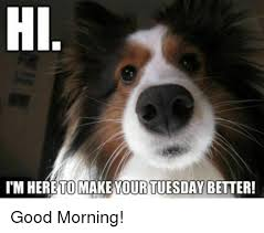 Tuesday Meme - hil im here to make your tuesday better good morning meme on me me