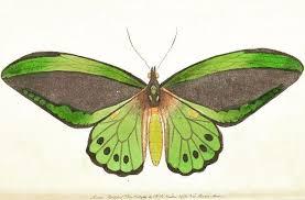 si e du s at stpatricksday enjoy green biodiversity in our flickr album