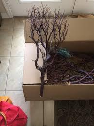 Manzanita Branches Centerpieces Manzanita Branches For My Centerpieces Came In Weddings Do It