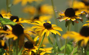 the flowers of summer at summer yellow flowers 6989460
