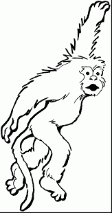 incredible capuchin monkey coloring pages with monkey coloring