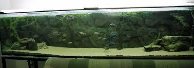 Dramatic Aquascapes Nikos Tsirouras 3 Meter Long Tank
