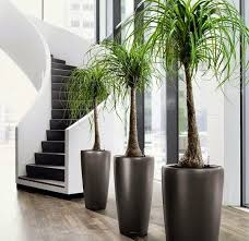 17 best plants to grow indoors without sunlight indoor palms