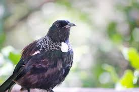 tuis the best of nz in your backyard aucklandtourism co nz
