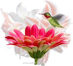 Flower And Bird - bird flower pictures photos and images for