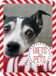 gift ideas for dogs and cats my life and kids