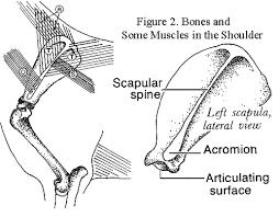 Dog Body Parts Anatomy Sirius Dog