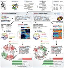computational meta u0027omics for microbial community studies