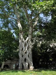 Gilroy Gardens Family Theme Park Gilroy Ca Gilroy Gardens One Man Dreamed Of Trees Part 2