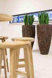 window planters indoor sansevieria zeylanica in scorza vase planten plants pinterest