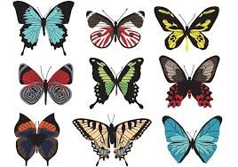 butterfly vectors 116188 welovesolo