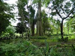 List Of Botanical Gardens Kisantu Botanical Gardens A List For Dr Congo