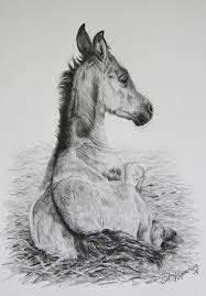 96 best pencil drawings of horses and donkeys by cathy spearing