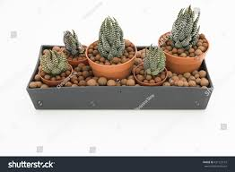 table centerpiece arrangement several small pots stock photo