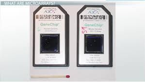 microarrays definition u0026 analyzing genes on a chip video