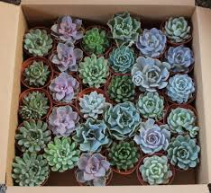 succulent planters for sale 4