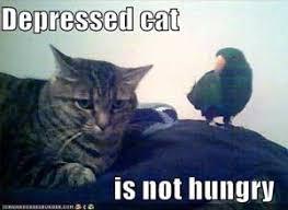 Depressed Cat Meme - my cat seems depressed poc