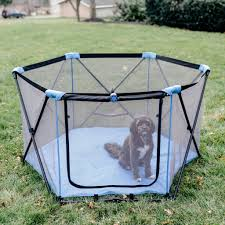 affenpinscher in orlando fl 14 brand new dog products you u0027re going to be beggin u0027 for