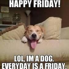 Pet Insurance Meme - happy friday to all pet lovers happyfriday petpremium pet