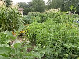 how to plan a vegetable garden garden making