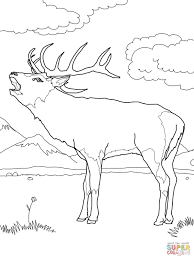 reindeer coloring page pages of deer hunting animal free