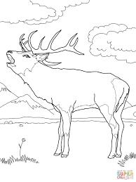 related coloring pages printable deer animal baby antlers free