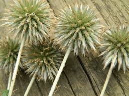 Dry Flowers How To Air Dry Flowers Grasses And Foliage Sow And So