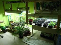 best light for plants best light for growing plants indoors best light for growing plants