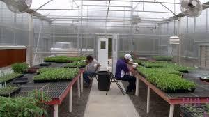 tomato grafting greenhouse design youtube